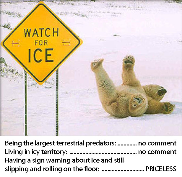 Priceless _-_ Slipping_polar_bear