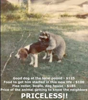 Dog getting fucked by a raccoon in the garden